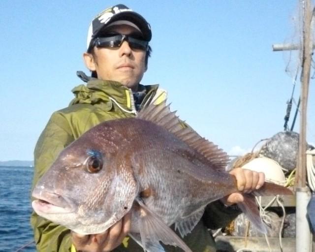 むつ湾真鯛