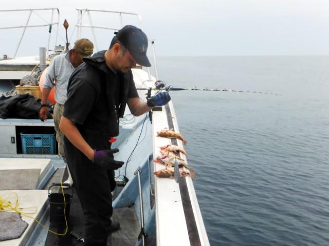 オキメバル釣り