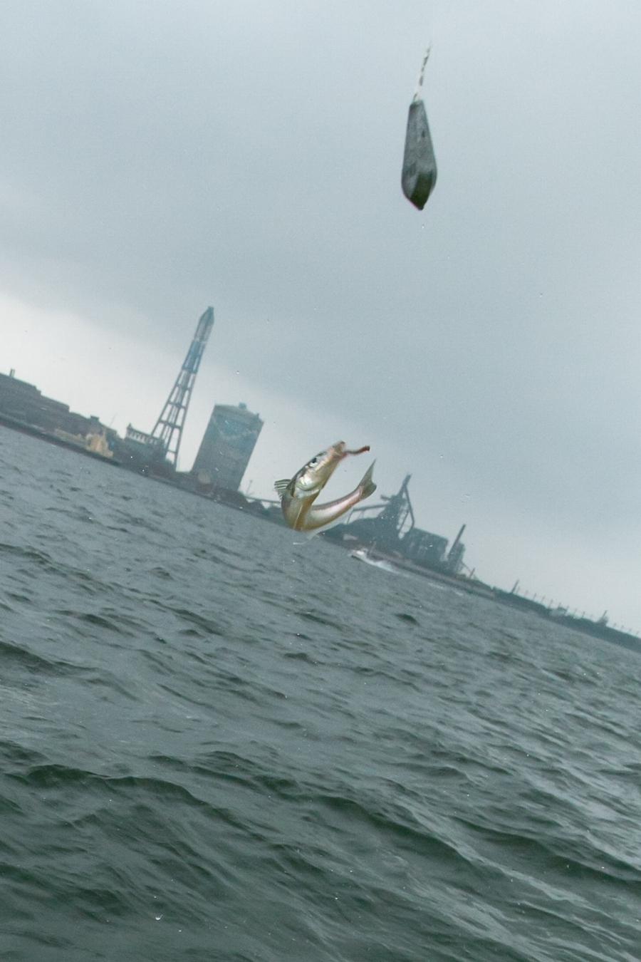東京湾のキス