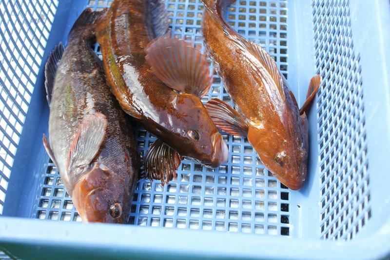 釜石磯根魚