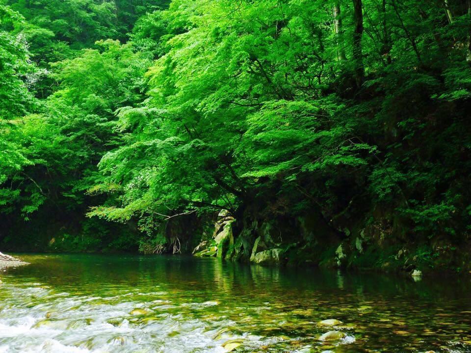 渓流トラウト
