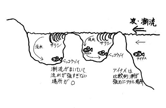図3水中の様子